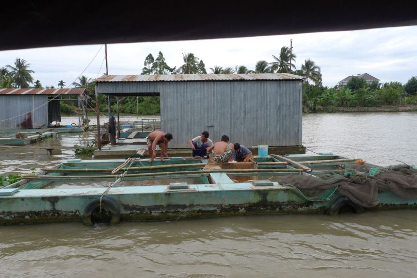 Fish Farm, Mekong River