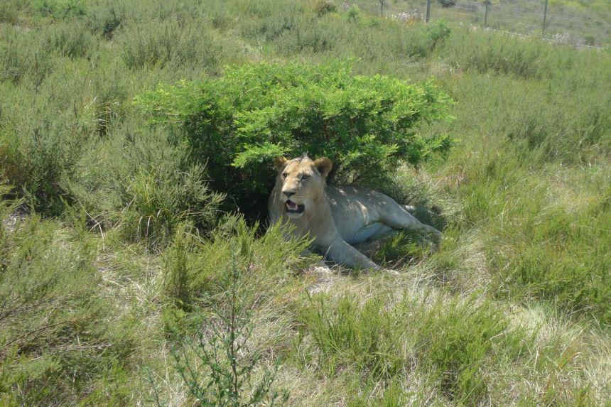 Inkwenkwezi Game Reserve, SA