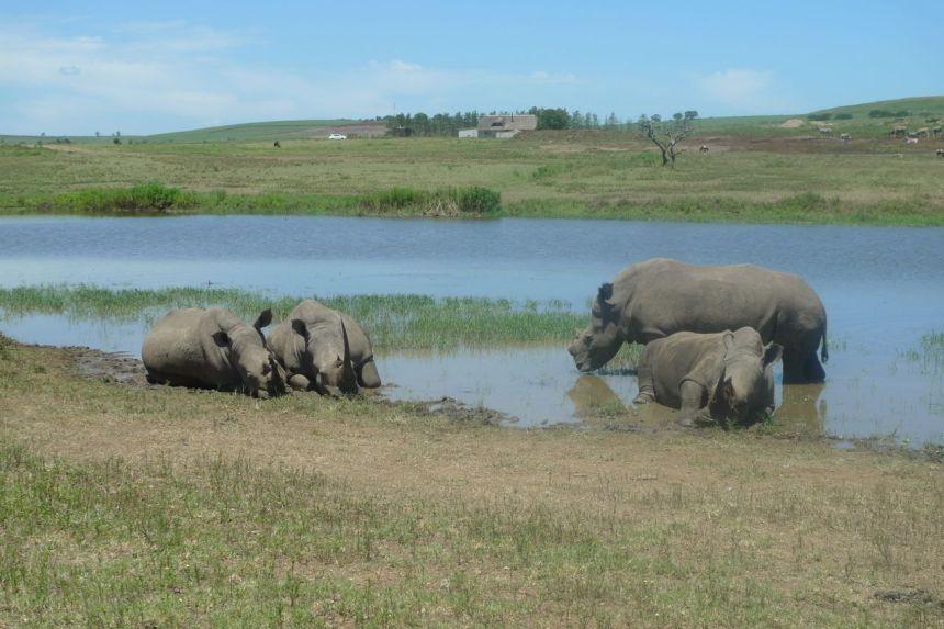 Tala Game Reserve, KwaZulu-Natal Hills, SA